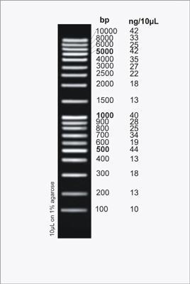 HighRanger Plus 100bp DNA Ladder, 100 Loads