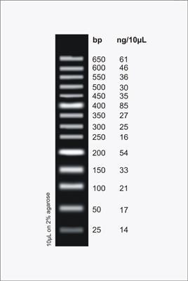 Mini Sizer 50bp DNA Ladder, 100 Loads