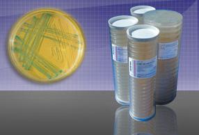 LB Agar Plates with Ampicillin -150, Kanamycin -60 and X-gal