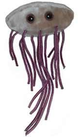 Giant Micobes Esherichia coli