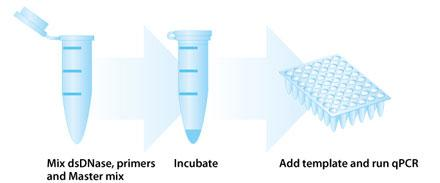 PCR Decontamination Kit
